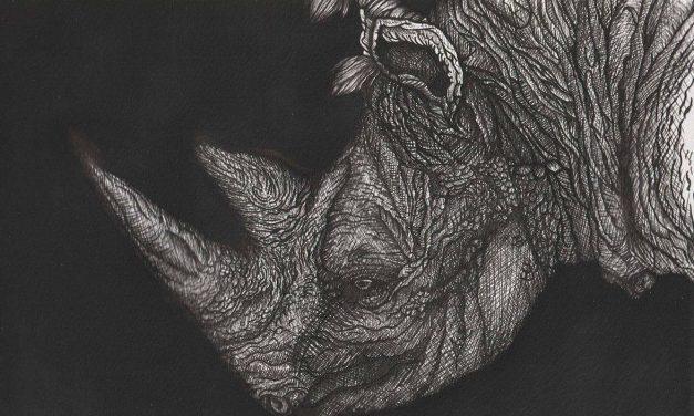Artwork of an endangered rhino becomes Eksentrika's Art of the Year 2017