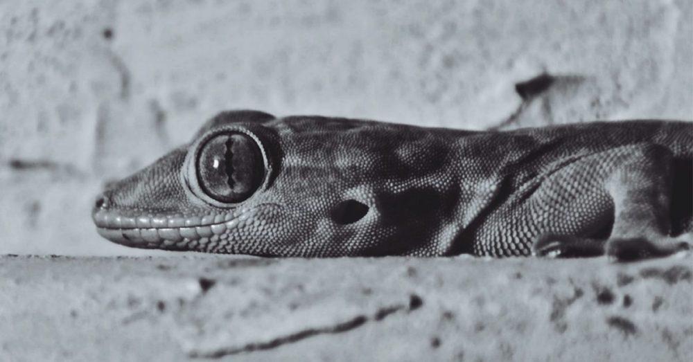 ESSAY | The Lizard In My Room by Mwaffaq Alhajjar